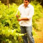Ross Rizzo  the Winemaker